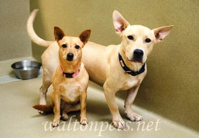 Athena and Roscoe 1