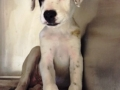 AP28 4mo M Lab x puppy 33567401